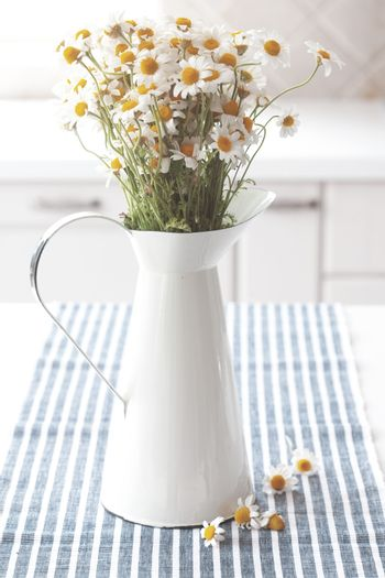 Chamomiles in pitcher