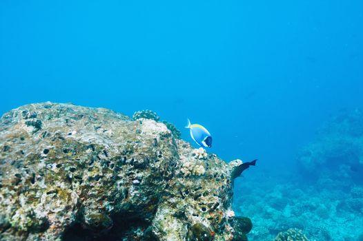 Coral reef at Maldives