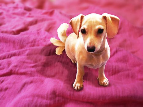 Three Tail Puppy