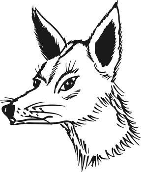 hand drawn, sketch, cartoon illustration of jackal