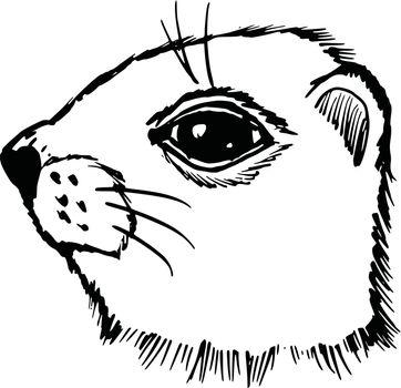 hand drawn, sketch, cartoon illustration of gopher