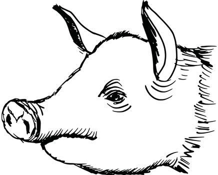 hand drawn, sketch, cartoon illustration of pig