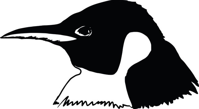 hand drawn, sketch illustration of head of penguin
