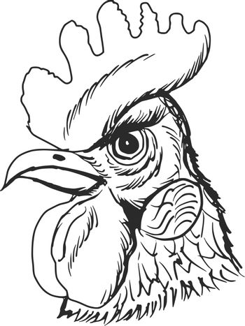 hand drawn, sketch, cartoon illustration of rooster