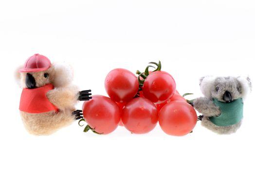 Toy koala collecting Cherry tomato on a white background