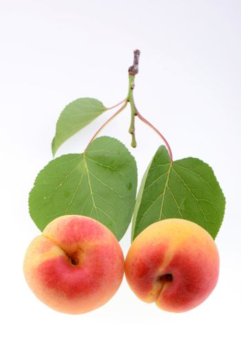 Ripe apricot on a white background