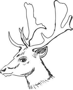 hand drawn, sketch, cartoon illustration of deer