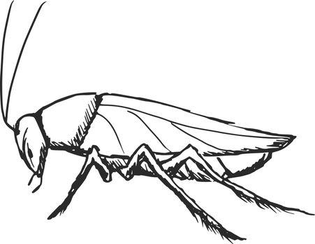 hand drawn, sketch, cartoon illustration of cockroach
