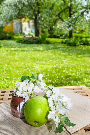 Green apple with a branch of a blossoming apple-tree. On a table in a garden