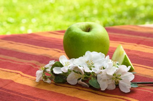 Green apple with a branch of a blossoming apple-tree,  in a garden