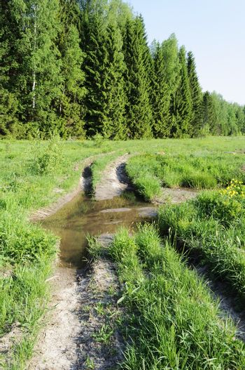 Dirt road along the edge of the woods with a big puddle