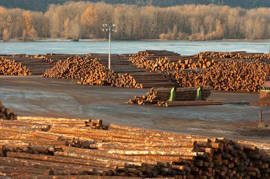 Large Timber Wood Log Lumber Processing Plant Riverside Columbia