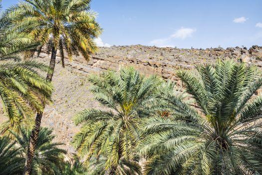 Palms of Misfah Abreyeen