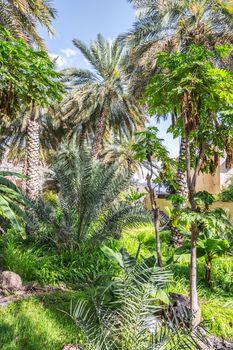 Wild garden Misfah Abreyeen