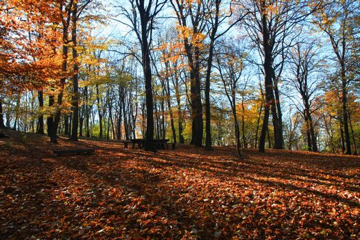 Forest on the mountain Avala close to serbian capital,Belgrade