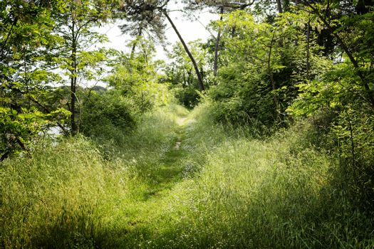 Walking road in the Pinewood forest on the Pialassa della Baiona brackish lagoon near Marina Romea along te  Adriatic seaside in Ravenna (Italy)