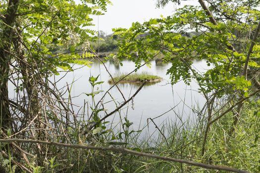 Plants in the Pialassa della Baiona brackish lagoon near Marina Romea on the  Adriatic seaside in Ravenna (Italy)