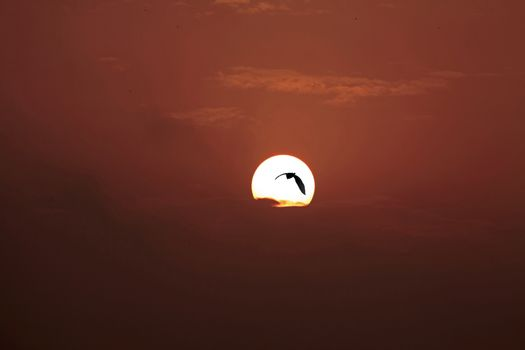 Red Dawn Bird silhouetted against sun