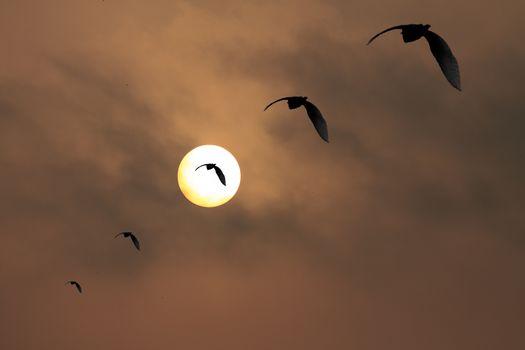Diagonal Single Line Formation five flying birds dusty dawn sun