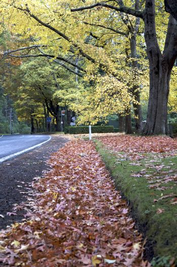 Beautiful Fall Trees With Road Drive Forrest