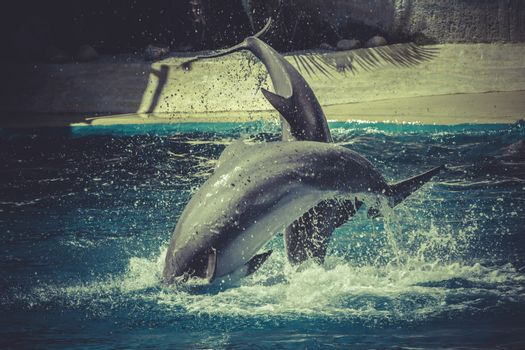 surfing, dolphin jump out of the water in sea