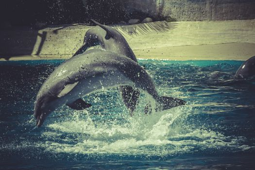marine, dolphin jump out of the water in sea