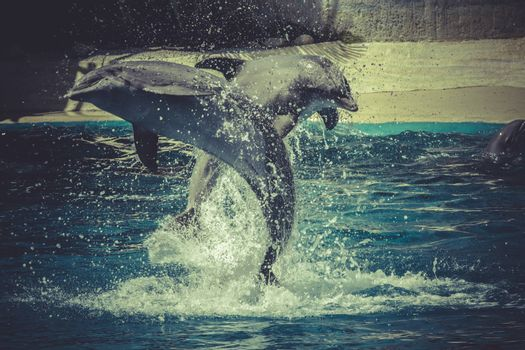 dolphin jump out of the water in sea
