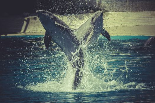 jumping, dolphin jump out of the water in sea