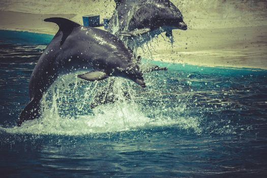 sealife, dolphin jump out of the water in pool