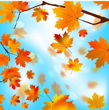 Autumn tree maple leaves against the blue, bright sky. EPS 8 vector file included