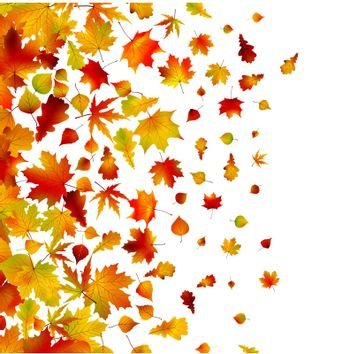 Autumn leaves, background. EPS 8 vector file included