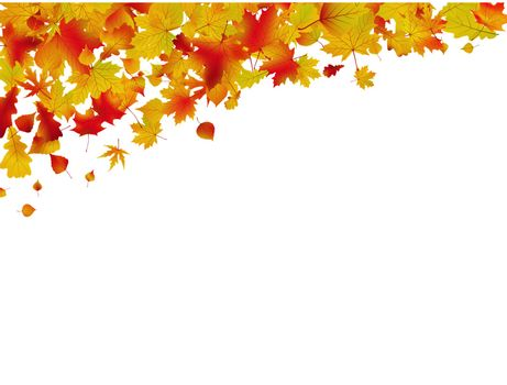 Autumn card of colored leafs isolated over a white background. EPS 8 vector file included