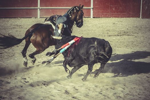 blood bullfight, traditional Spanish party where a matador fight