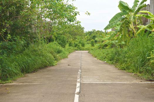 T junction of road between green trees