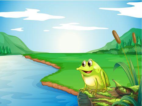 A frog at the riverbank
