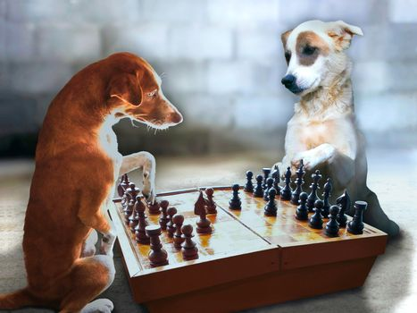 Chess Dogs