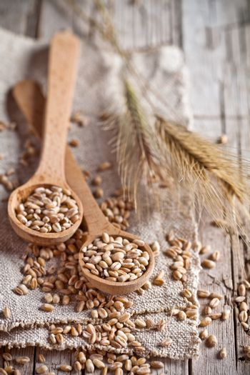 wheat grain in wooden spoons and ears
