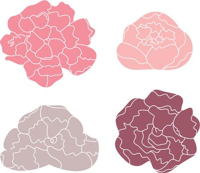 Sweet Peony flowers collection. Vector Illustration