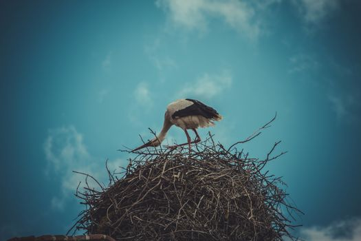 Procreation, Stork nest made ������of tree branches over blue sky in dramatic
