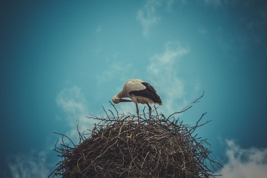 Nesting, Stork nest made ������of tree branches over blue sky in dramatic