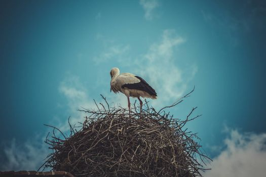 Summer, Stork nest made ������of tree branches over blue sky in dramatic