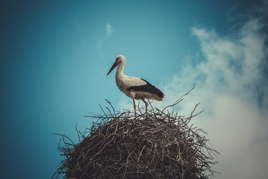 Bird, Stork nest made ������of tree branches over blue sky in dramatic