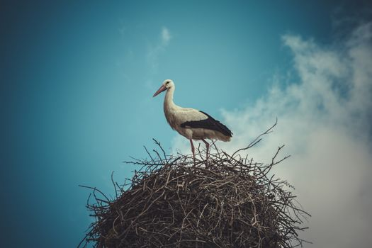 village, Stork nest made ������of tree branches over blue sky in dramatic