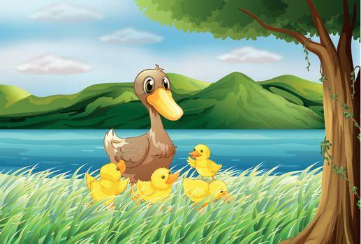 Five ducks at the riverbank