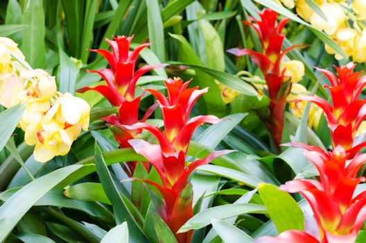 Red bromeliad rosette shape flowers