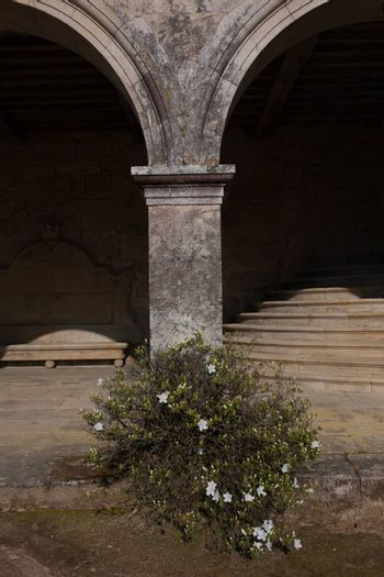 isloated bush and column with staircase and shadows in the backgound located in a galician palace in the north west of Spain