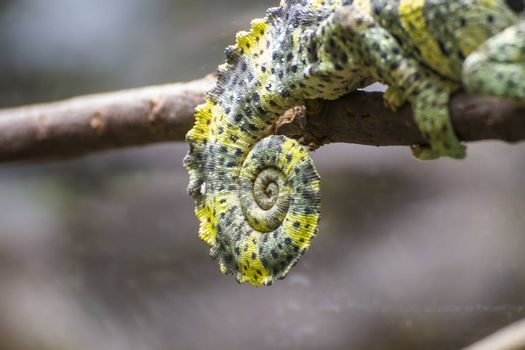 chameleon uploaded to a branch with beautiful green colors