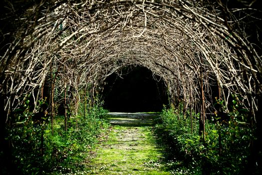 tunnel of grape branches