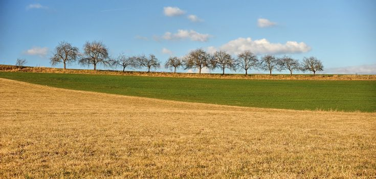 Spring field with blue sky and trees in background