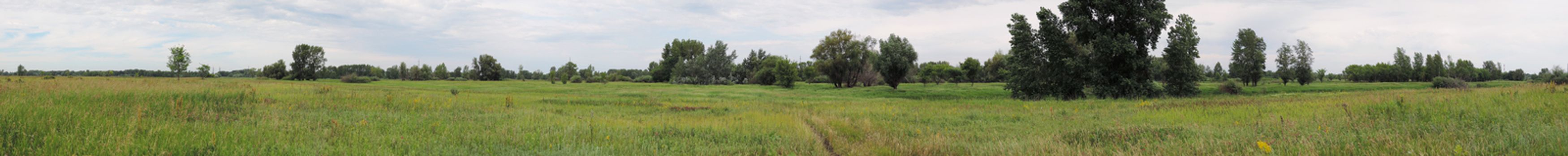 large summer field panorama